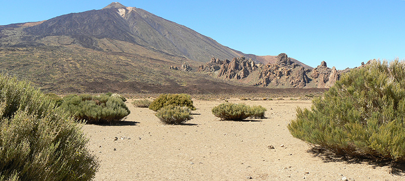 En las islas oceánicas, como las Islas Canarias, la biota tiende a ser más pobre y singular que en áreas continentales, mientras que los patrones y procesos en sus ecosistemas presentan particularidades que las hacen atractivas como laboratorios de estudio. Panorámica de los Llanos de Ucanca, bajo el Teide, en la isla de Tenerife