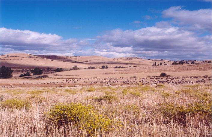 Los cultivos extensivos de herbáceos constituyen uno de los principales sistemas agrarios de alto valor en España (Cobeña, Madrid)